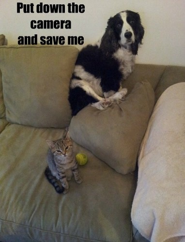 dogs save me Cats wimp - 7866268672