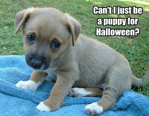 costume dogs halloween puppies cute - 7866276352