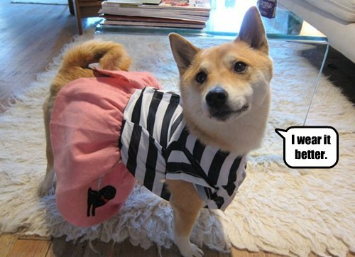 costume dogs wear it better halloween cute