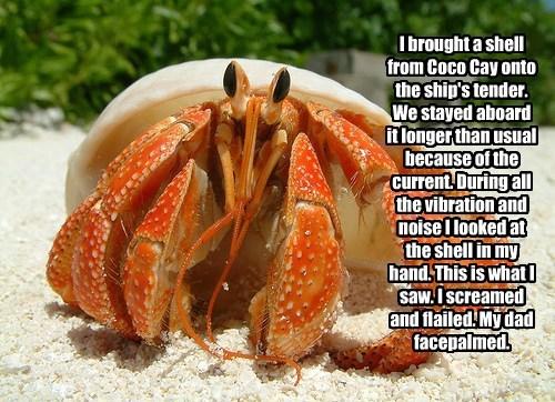 Cheezburger Image 7866374912
