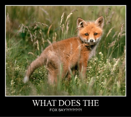 what does the fox say funny question song - 7866615552