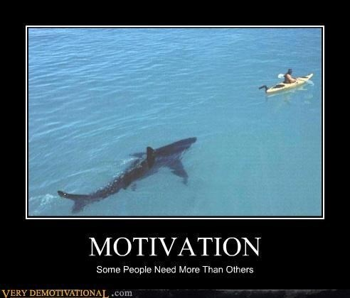 scary,paddle,life,wtf,shark,funny