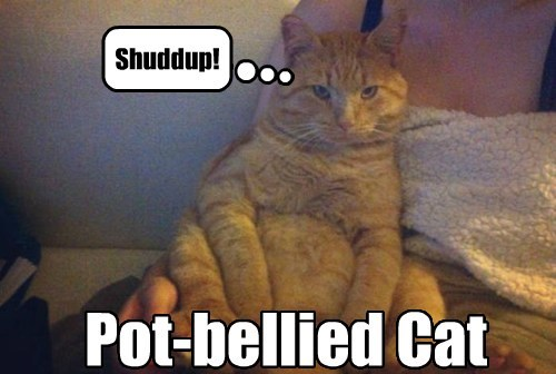 Pot-bellied Cat Shuddup!