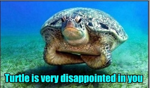 turtles sea life grumpy shellfish - 7866728192