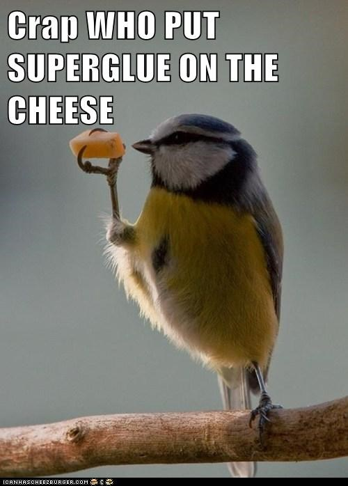 cheese,birds,superglue