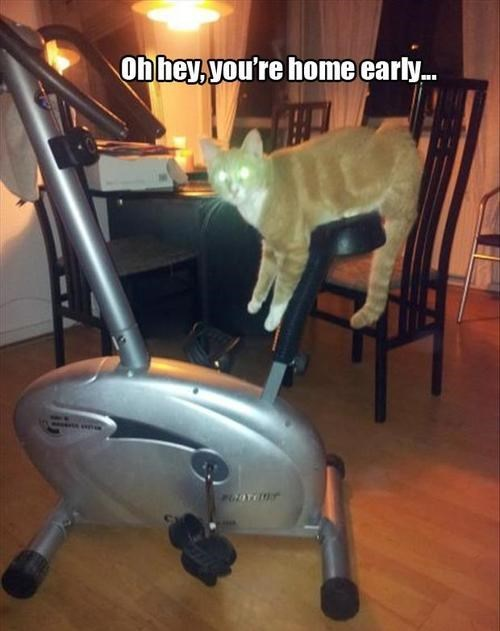 exercise,surprise,stationary bike,doing it wrong,Cats