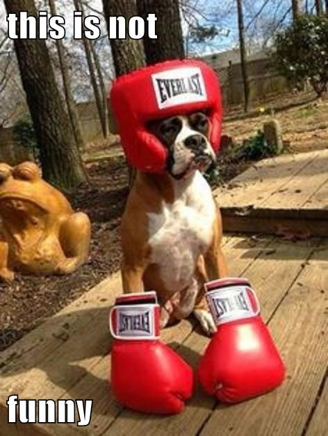 costume dogs halloween boxer - 7867135744