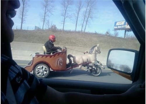 cars,driving,funny,horse,g rated,win