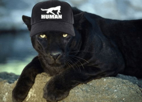 fashion puma brands Cats whatbreed - 7867971584
