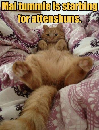 cute lolspeak pet me Cats - 7868300032