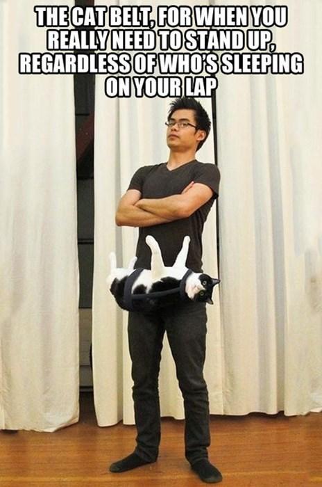 fashion Cats funny - 7868488704