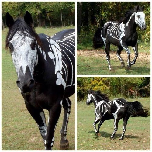 costumed critters g rated horses skeletons