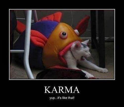 cat fish funny karma - 7868676352