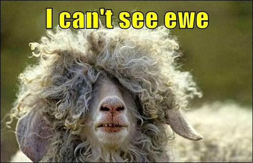 ewe pun herd sheep funny - 7868818432