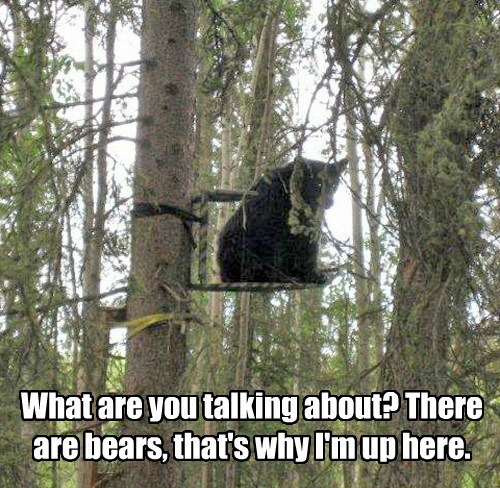 safe,bears,hiding,funny