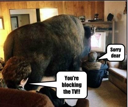 TV buffalo funny - 7869414656