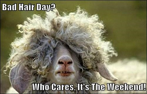 hair,sheep,weekend