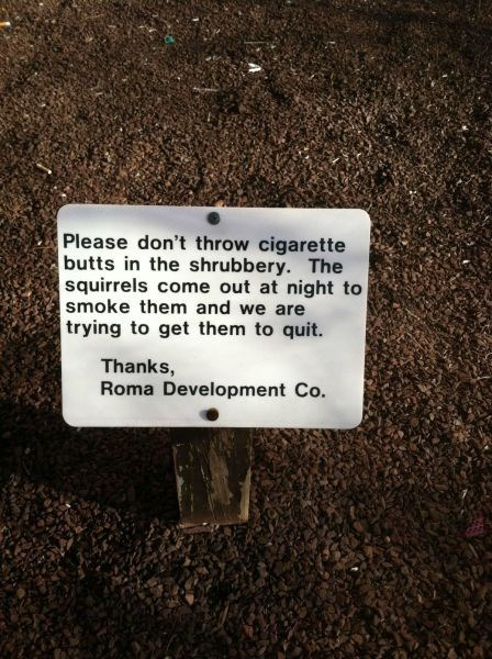 cigarettes,squirrels,smoking