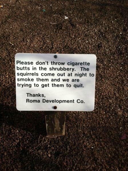 cigarettes squirrels smoking - 7869949440
