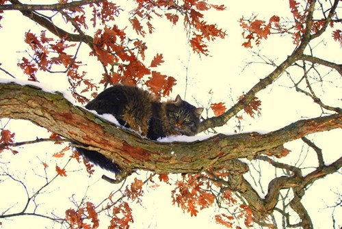 autumn,cute,tree,leaves,Cats,national cat day 2013