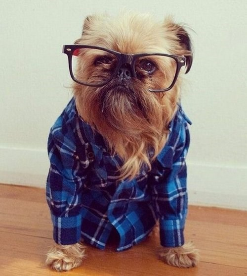 dogs fashion hipster
