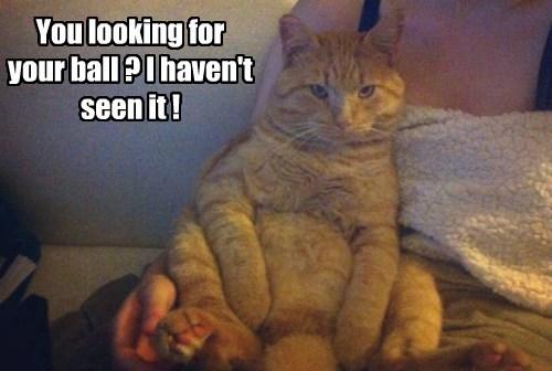innocent ball Cats funny - 7870058752