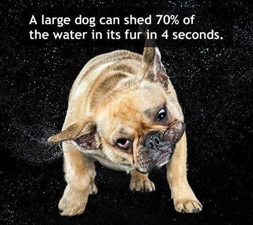 dogs water shake funny - 7870127872