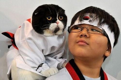 costume halloween martial arts laser Cats