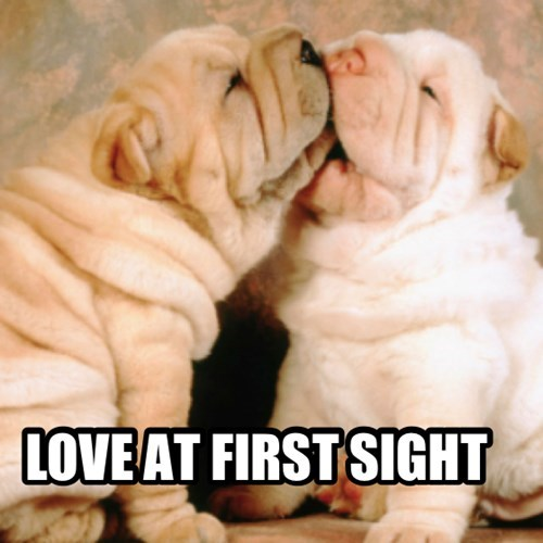 dogs,puppies,wrinkles,cute