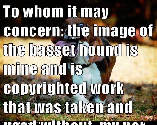 Cheezburger Image 7870339584