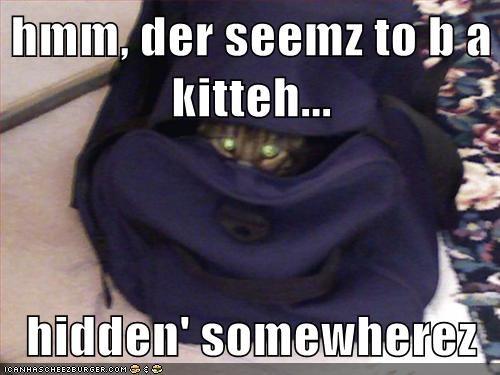 eyes Cats hiding funny - 7870342656