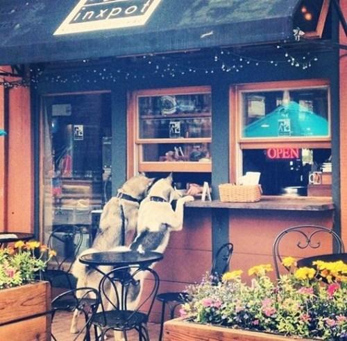 foam dogs coffee funny latte - 7870845184