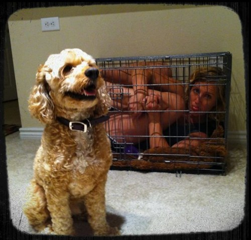 tricked,dogs,crate,smart,funny