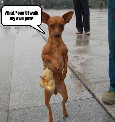 crazy dogs walk complex - 7872345856