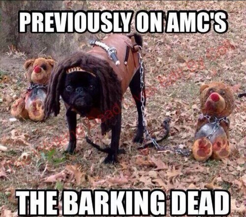 Dog - PREVIOUSLY ON AMCS THE BARKING DEAD