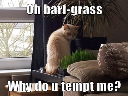temptation,grass,barf,Cats