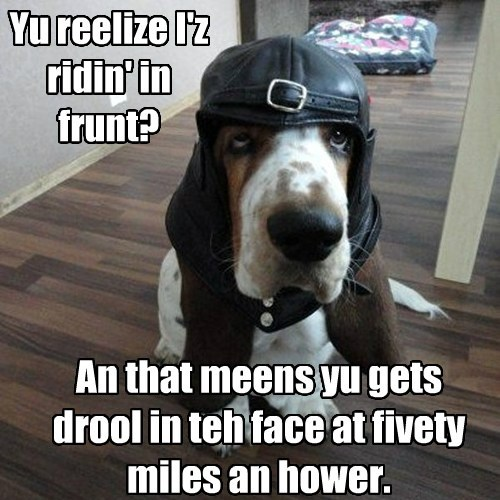 dogs helmet drool cute - 7873277952