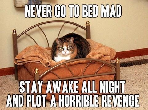 revenge Cats funny national cat day 2013 - 7873339904