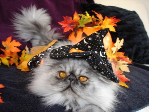 costume halloween witch cute Cats - 7873369344