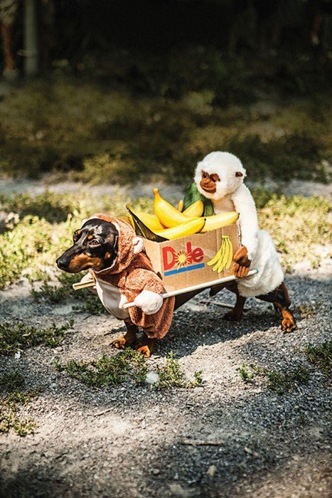 costume,dogs,halloween,bananas,funny