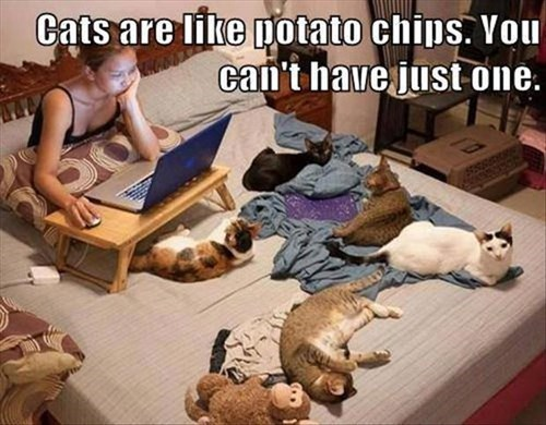 potato chips,not just one,cute,Cats,national cat day 2013