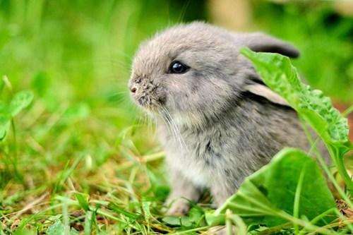 bunnies cute grass - 7873426688