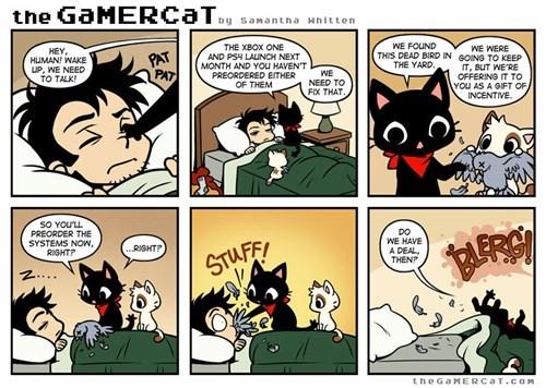 the gamer cat web comics - 7873667072