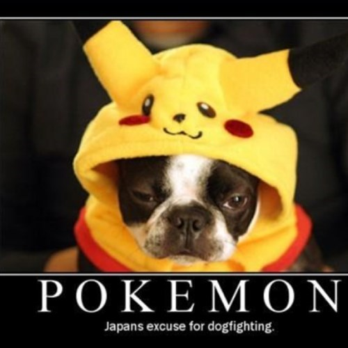 dogs Pokémon wtf Japan video games - 7873750272