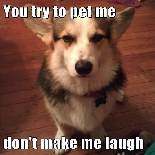 You try to pet me don't make me laugh
