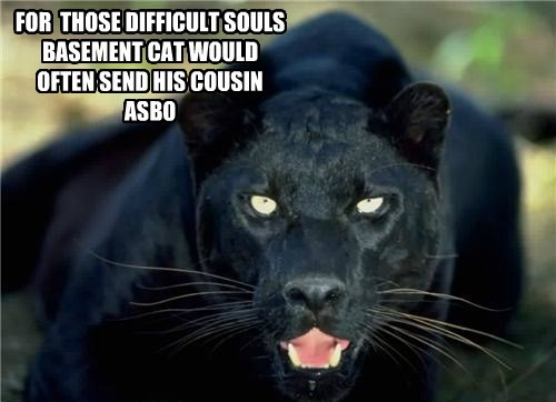 FOR  THOSE DIFFICULT SOULS  BASEMENT CAT WOULD OFTEN SEND HIS COUSIN ASBO