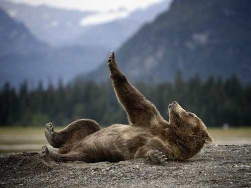 bears,cute,mountain,sleepy