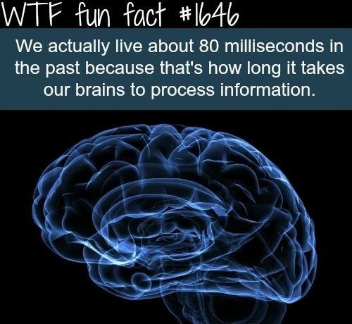 Fun Fact brain science funny - 7874138368