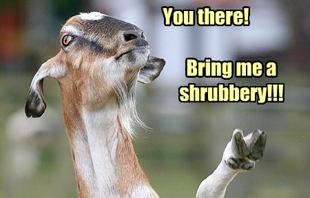 shrubbery goats order - 7874184960