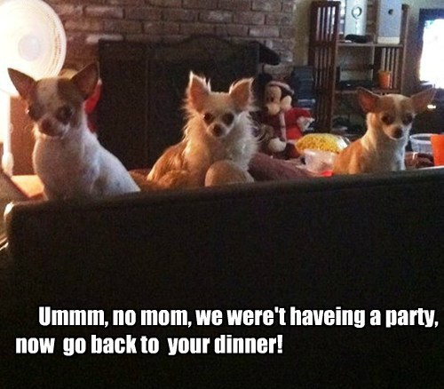 Ummm, no mom, we were't haveing a party, now now go back to your dinner!